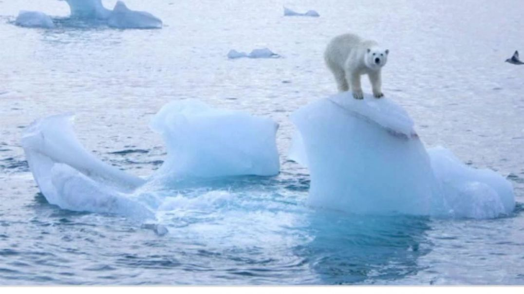 Climate change- Sea ice loss linked to spread of deadly virus.mp4