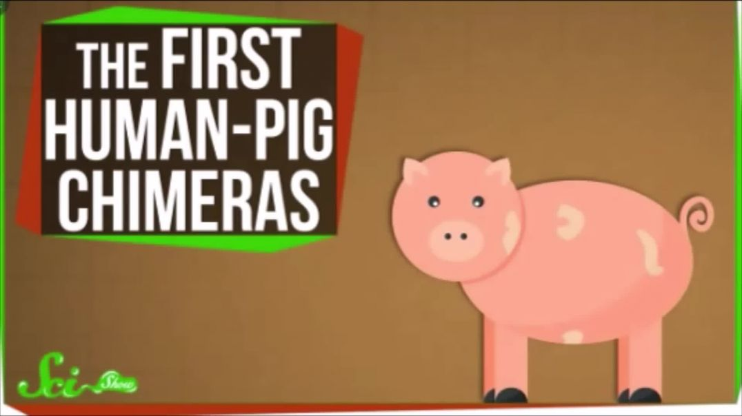 Pink Pig Chimera Tries To Pass For Human Using Trick Girdle