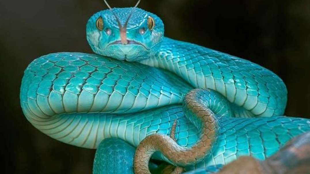 Nuben Menkarayzz - The Real Purpose For Serpents & Snakes On Earth